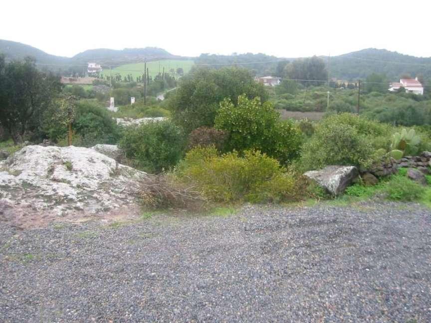 Due Alberi In Giardino Mediterraneo Compagnia Del Giardinaggio