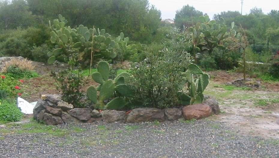 Due alberi in giardino mediterraneo compagnia del - Giardino mediterraneo ...